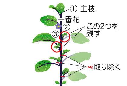 ナス(苗)|野菜の育て方|野菜・花の育て方|アース ...
